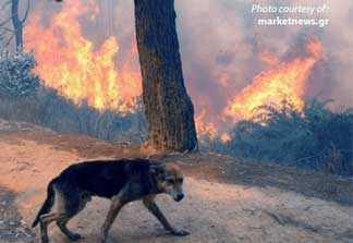 EMERGENCY ANIMAL CARE - GREEK FIRES