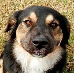 Calhoun County Humane Society