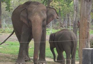 KEEP NEPAL'S ELEPHANTS CHAIN-FREE