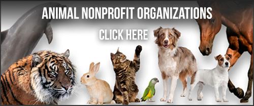 GivingGrid Animals
