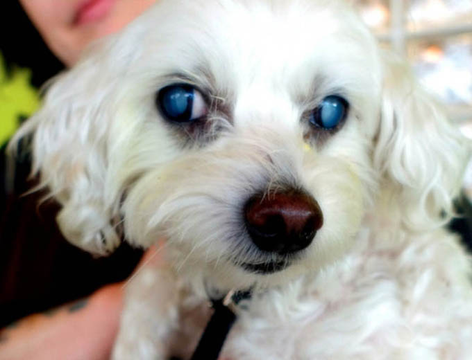 HELP RESTORE BLIND DOG'S SIGHT