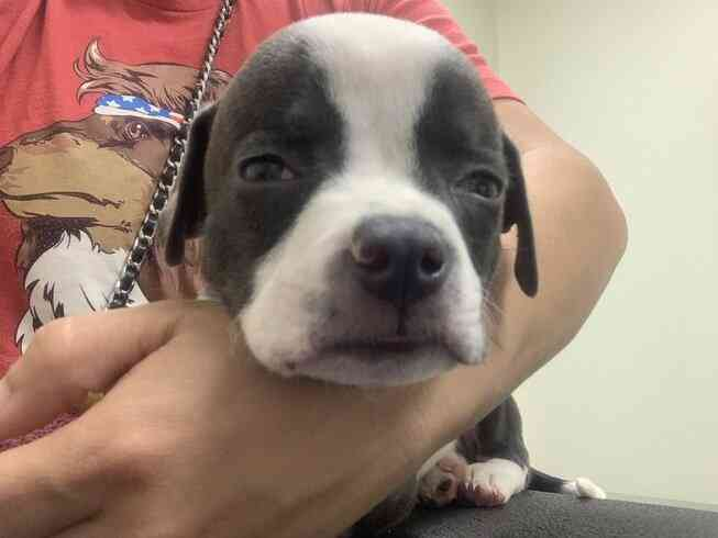 Help With The Hydrocephalus Puppy